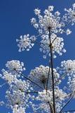 De bloem van de winter Royalty-vrije Stock Foto's