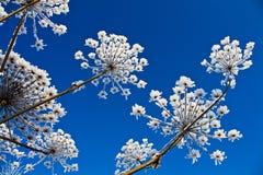 De bloem van de winter Stock Foto