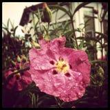 De bloem van de zomer Royalty-vrije Stock Afbeelding