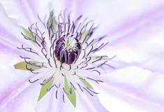 De bloem van de zomer stock fotografie