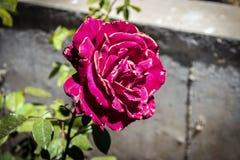 De bloem van de zomer Stock Afbeeldingen