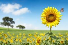 De bloem van de zon Royalty-vrije Stock Afbeelding