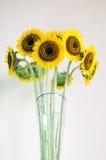 De bloem van de zon in de glasvaas Stock Afbeeldingen