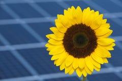 De bloem van de zon en zonenergie Royalty-vrije Stock Foto's
