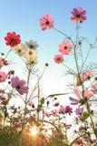 De bloem van de zon met blauwe hemel Royalty-vrije Stock Afbeeldingen