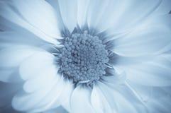 De bloem van Dreamlike Stock Afbeelding