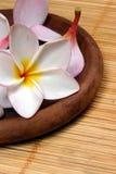 De bloem van Frangipane op de rotanachtergrond Stock Afbeelding