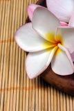 De bloem van Frangipane op de rotanachtergrond Royalty-vrije Stock Fotografie