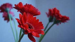 De bloem van Gerbera Stock Fotografie
