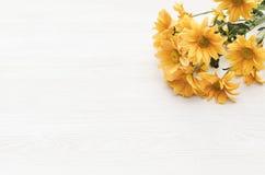 De bloem van het chrysantenmadeliefje op witte achtergrond met exemplaarruimte Stock Foto's