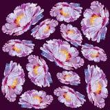 De bloem van het de pioenornament van Paeoniasuffruticosa royalty-vrije illustratie