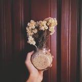 De bloem van het edelweiss Stock Foto's