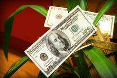 De bloem van het geld Stock Afbeelding