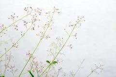 De bloem van het ginsengkruid royalty-vrije stock afbeelding
