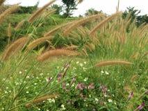 De bloem van het gras Stock Foto's
