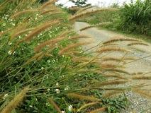 De bloem van het gras Stock Foto