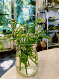 De bloem van het gras Royalty-vrije Stock Afbeelding