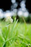 De bloem van het gras royalty-vrije stock fotografie