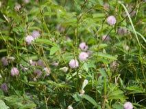 De bloem van het gras royalty-vrije stock foto's