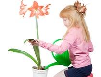 De bloem van het huis Royalty-vrije Stock Foto's