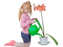 De bloem van het huis Stock Afbeelding
