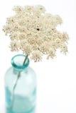 De bloem van het Kant van koningin Anne Royalty-vrije Stock Afbeelding