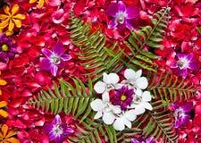 De bloem van het kuuroord Stock Foto
