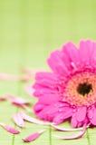 De bloem van het kuuroord Stock Foto's