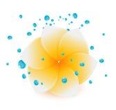 De bloem van het kuuroord Stock Afbeeldingen