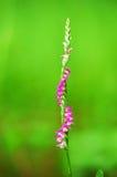 De bloem van het lint Royalty-vrije Stock Foto's
