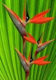 De bloem van het paradijs Stock Afbeeldingen