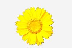 De bloem van ISO Stock Foto's