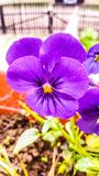 De bloem van de lente royalty-vrije stock afbeeldingen