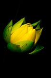 De bloem van Lotus Royalty-vrije Stock Fotografie