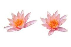 De bloem van Lotus die op wit wordt geïsoleerdv Royalty-vrije Stock Afbeelding