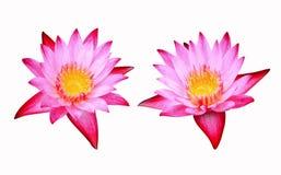 De bloem van Lotus die op witte achtergrond wordt geïsoleerdd Stock Foto