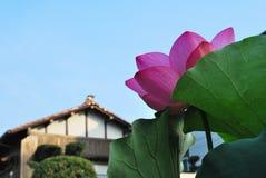 De bloem van Lotus met tempelachtergrond stock foto's