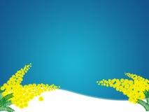 De bloem van mimosa's Stock Afbeeldingen