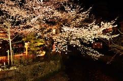 De bloem van nachtsakura en rode parasol, Kyoto Japan Stock Fotografie