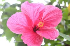 De bloem van Nice royalty-vrije stock afbeelding