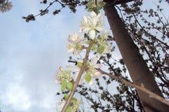 De bloem van Nice wit behang als achtergrond voor u royalty-vrije stock afbeelding