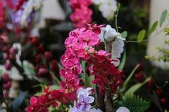 De Bloem van de orchidee in Thailand Royalty-vrije Stock Afbeeldingen