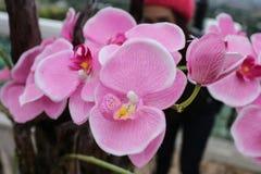 De Bloem van de orchidee in Thailand Royalty-vrije Stock Foto's
