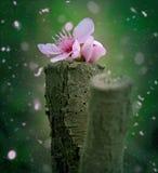 De bloem van de perzikbloesem gevallen op een stuk van hout royalty-vrije stock foto