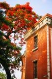 De bloem van Phoenix & oud huis Stock Foto