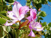 De bloem 2011 van tel. Aviv Orchid Tree Royalty-vrije Stock Foto's