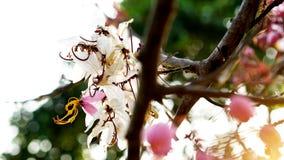 De bloem van de tijgertijger in Thailand royalty-vrije stock foto