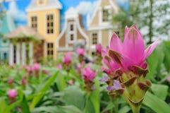 De bloem van de tulp Stock Afbeeldingen
