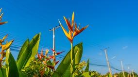De Bloem van vogelparadise op de plattelandsgebiedachtergrond stock foto's