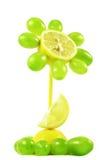 De bloem van vruchten op wit stock foto's